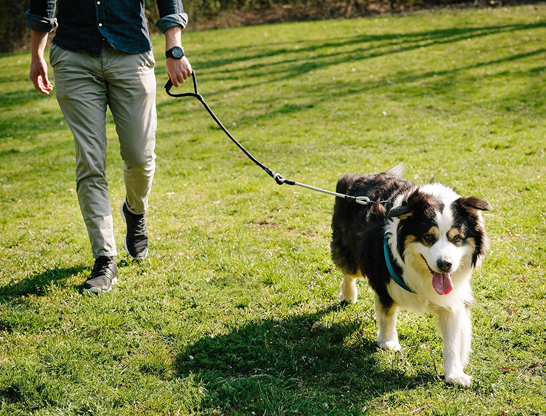 Rudelkönig Hundeleine aus hochwertigem Kletterseil – widerstandsfähig & pflegeleicht